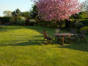 Садово-парковый или обыкновенный газон